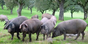 Iberico-Meats-The-Food-Resource